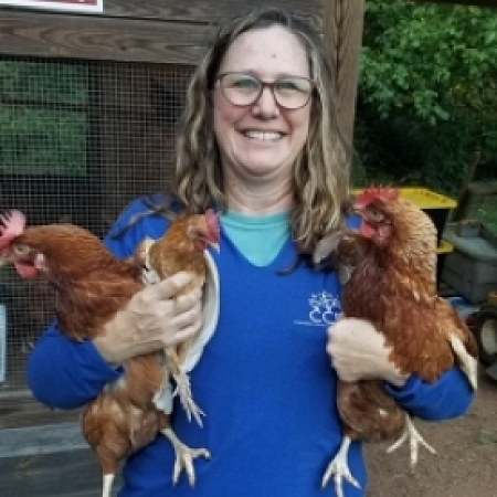 Chick with Chickens